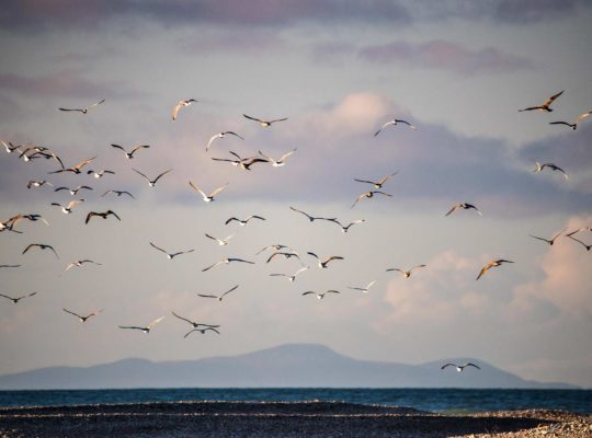 Spey Bay, l'eau, la tourbe et les oiseaux