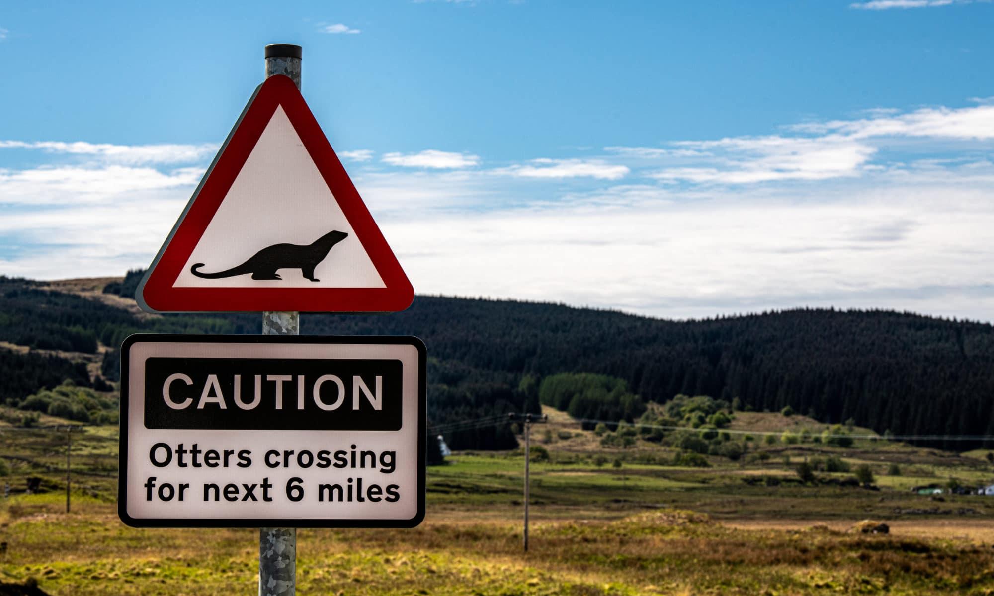 Attention, traversée de loutres