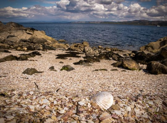 Tarbert, la plage aux coquillages
